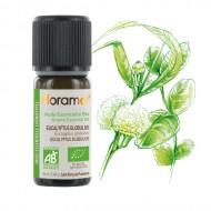 FLORAME: Aceite esencial de EUCALIPTO 100% BIO 10ml